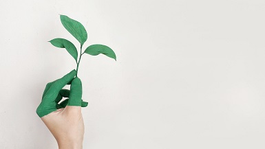 Green Evolution: Designing Environmentally Friendly Products