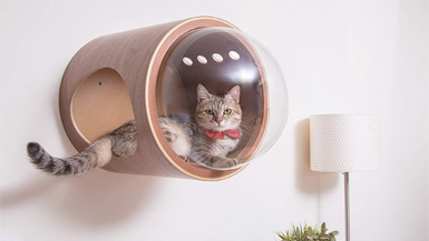 Three Innovative Inventions for Your Pets