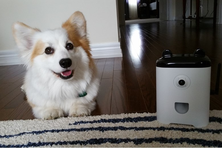 Puppy and PetBot