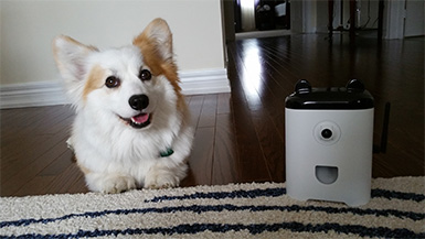 Where Are They Now? From PetBot to Petcube